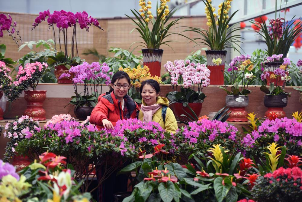 河北广阳:花俏喜迎春
