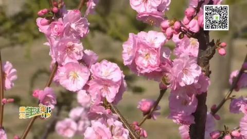 又是一年春來到 踏青賞花正當時