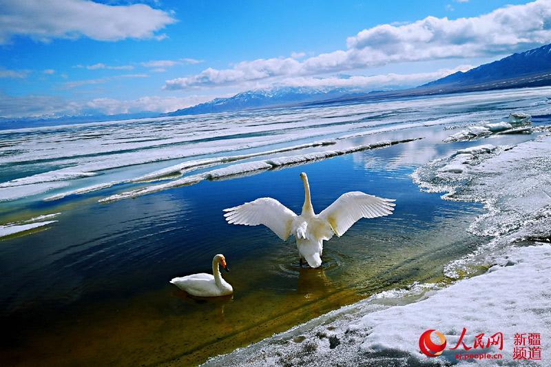 """新疆賽里木湖""""解凍"""" 美如仙境"""