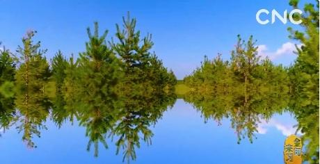 金句来习|众人植树树成林