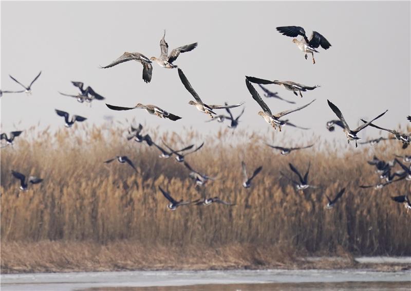 河北修复滨海湿地1243.35公顷