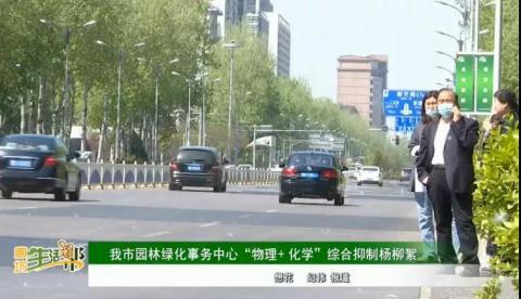 """廊坊市园林绿化事务中心""""物理+化学""""综合抑制杨柳絮"""