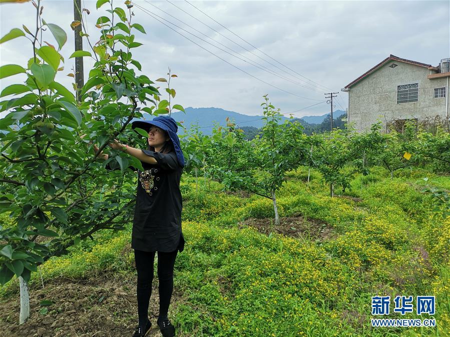 """县域经济强县的""""扶贫经""""——来自湖南浏阳市的脱贫攻坚查询拜访"""