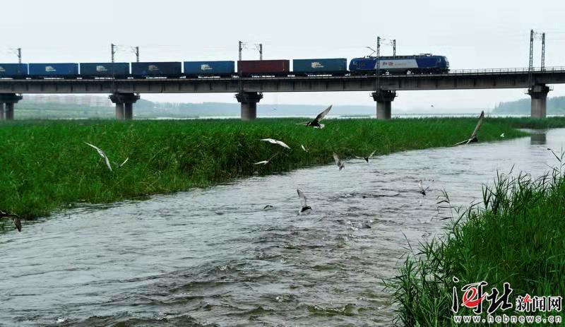 文安:构建区域水乡生态体系