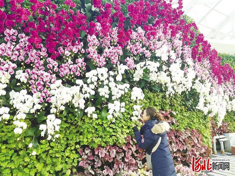 河北石家庄植物园: 郁见蝶梦 鼠你好看