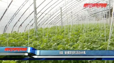 永清:绿色鲜菜日供北京达600吨