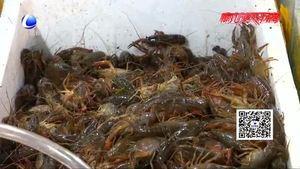 美味龙虾季也有烦恼 吃小龙虾过敏了怎么办?
