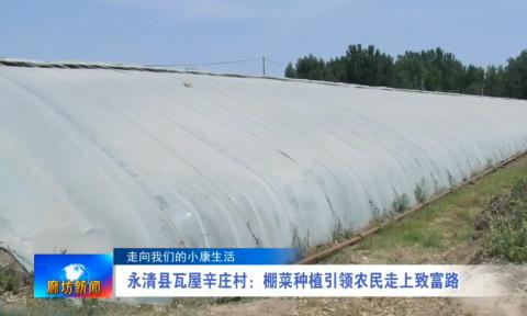 永清县瓦屋辛庄村:棚菜种植引领农民走上致富路