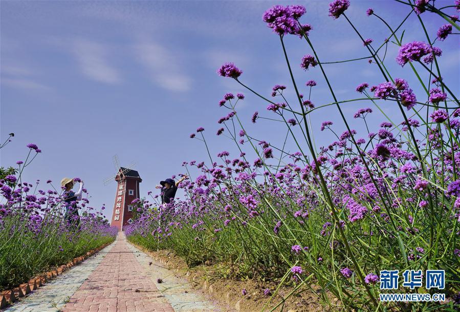 河北迁安:沙荒地变现代农业园