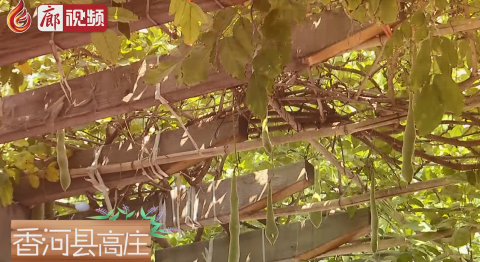 廊视频 | 走向我们的小康生活(香河县高庄)