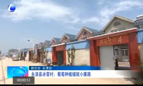 永清县冰窖村:葡萄种植铺就小康路