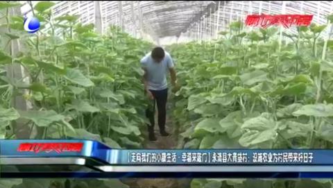 【走向我们的小康生活·幸福来敲门】永清县大青垡村:设施农业为村民带来好日子
