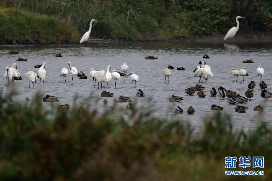 景色迷人的闽江河口国家湿地公园