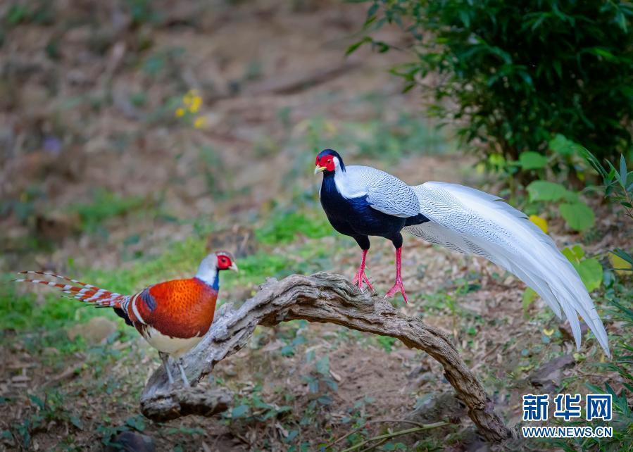 大美山村观鸟热