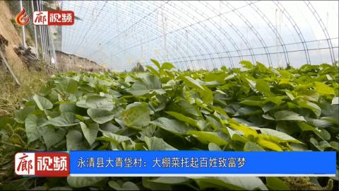 廊视频|永清县大青垡村:大棚菜托起百姓致富梦