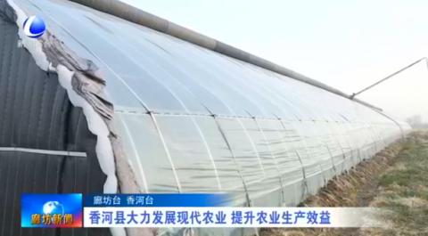 香河县大力发展现代农业 提升农业生产效益