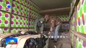 永清县瓦屋辛庄村:抓好蔬菜生产 全力供应北京市场
