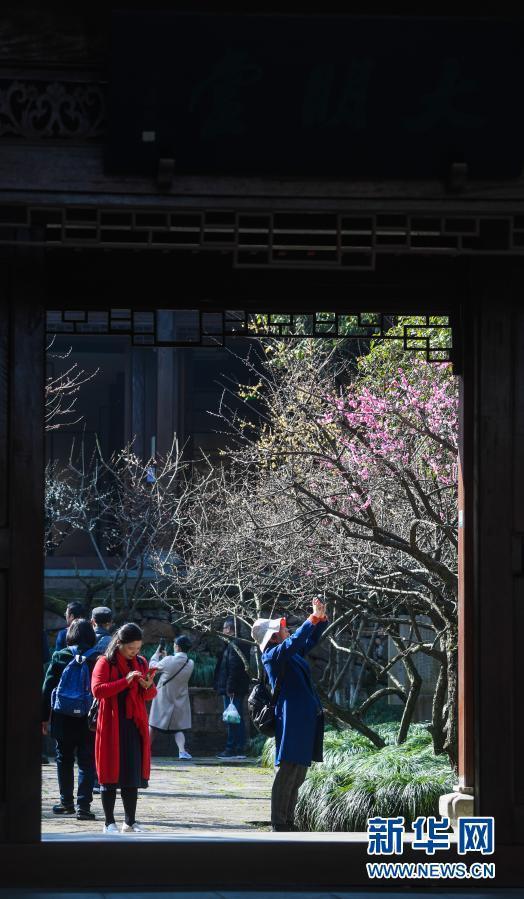 十里梅花香雪海 千树万树喜迎春