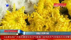 清明臨近 祭祀鮮花熱銷