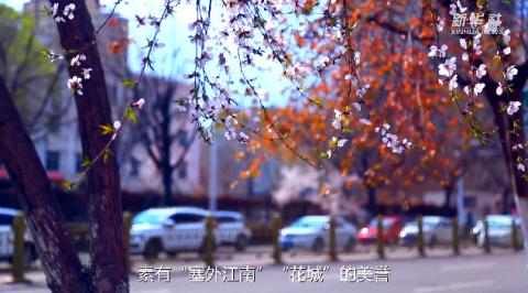 新疆伊犁河谷开启赏花季