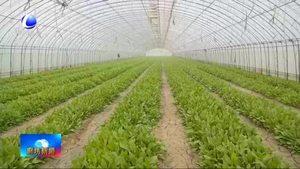香河县:大力发展现代农业 铺就农民致富路