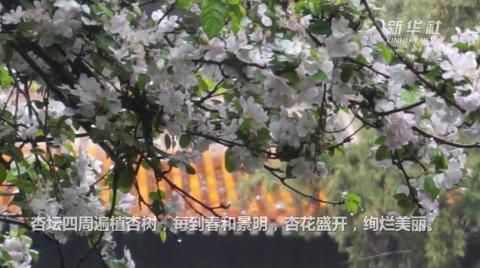 孔子杏坛游客众