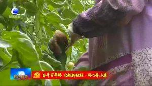 特色番茄小镇:科技赋能番茄种植?打造现代农业新样板