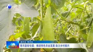 香河县钳屯镇:推进特色农业发展 助力乡村振兴
