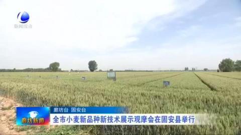 全市小麦新品种新技术展示观摩会在固安县举行