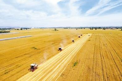 河北小麦亩产首破800公斤