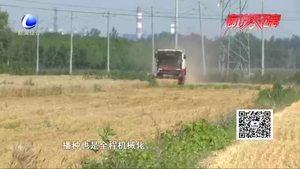 安次区落垡镇东张务村:夏收好时光 正是一年麦子香