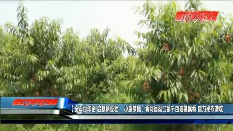 香河县渠口镇千亩油桃飘香 助力果农增收