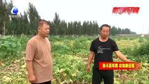 永清县吴家场三村功良种养农民专业合作社:订单南瓜效益高